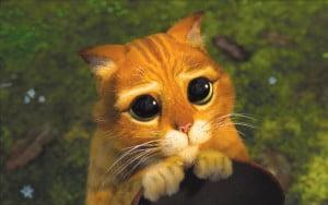 le-chat-potte-2-5515807de0efd